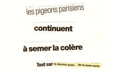 les pigeons parisiens continuent à semer la colère. tout sur le dernier poilu de la zone verte